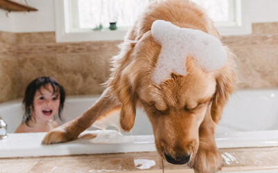 SHOULD YOU INSURE YOUR FOUR-LEGGED FRIEND?